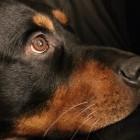 Adobe: Camera Raw 8.4 gegen Blitz-Tieraugen