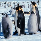 Open Source: Linux 3.15 startet in die Testphase