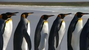 Die Zusammenarbeit der Linux- und Systemd-Teams ist nicht immer gut.