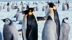 Linux 3.15 startet in die Testphase.