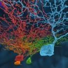 Eyewire: Funktionsweise des Auges durch Onlinespiel entschlüsselt