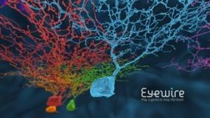 Eyewire: Bipolarzelle mit Zeitversatz