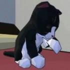 Catlateral Damage: 40.000 US-Dollar für Katzen-Chaos