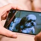 Maschinenlernen: Neuronales Netz von Microsoft erkennt Hunderassen