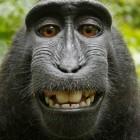 Affen-Selfie: US-Behörde spricht Tieren Urheberrechte ab