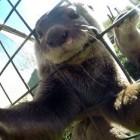 Affen-Selfie: Fotograf vergleicht Wikipedianer mit Hitler und Stalin