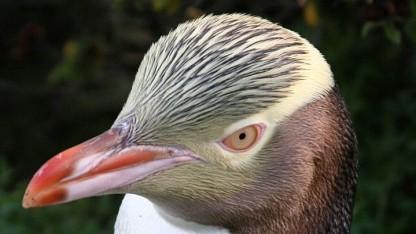 Linux 3.17 ist freigegeben.