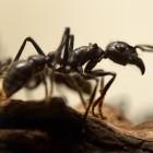 AntMe V2: Programmieren lernen mit Ameisen
