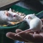 Gehirnforschung: Licht programmiert Gedächtnis um