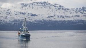 Schon 2016 könnten Teile der Arktis per Glasfaserkabel online gehen.