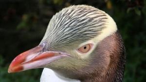 Linux 3.17 geht in die Testphase.