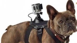 Hunde-Stativ Fetch