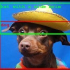 Google: Neue Bilderkennung unterscheidet Personen, Tiere und Dinge
