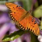 Transistoren: Rechnen nach dem Schmetterlingsflügel-Prinzip