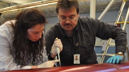 Forscher bergen die DNA-Probe: überrascht über die Zahl funktionsfähiger DNA-Molküle