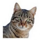 Google No-Captcha: Katzenbildchen statt Zeichenfolge