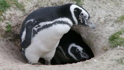 Linux 3.18 erhält viele Verbesserungen am Netzwerkstack.