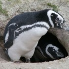Betriebssysteme: Mit Linux 3.18 lässt sich besser netzwerken