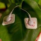Biofeedback: Wenn der Blumentopf rockt