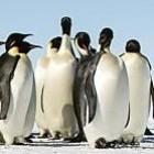 Linux-Jahresrückblick 2014: Umbauarbeiten, Gezanke und Container