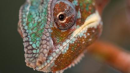 Echse (engl. Lizard)