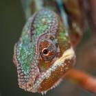 Lizard Squad: DDoS-Angriffe angeblich mit bis zu 1,2 TBit pro Sekunde