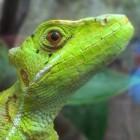 Lizard Stresser: 70 US-Dollar für eine DDoS-Attacke über acht Stunden