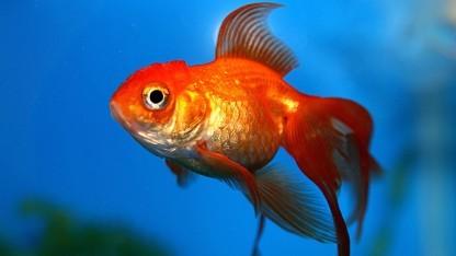 Eine Software namens Superfish sorgt auf Lenovo-Laptops für Ärger.