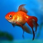 Adware: Superfish-Chef bestreitet Sicherheitsrisiko