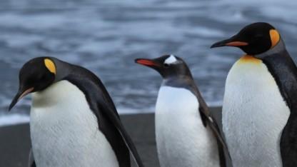 Der nächste Linux-Kernel erhält die Versionsnummer 4.0.