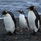 Linux 4.0: Streit um das Live-Patching entbrennt