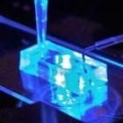 Organ-on-a-Chip: US-Forscher entwickeln Herzchip für Medikamententests