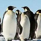 Linux: Kernel-Hacker wollen Konflikte besser lösen