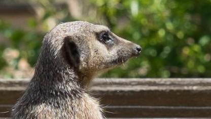 Twitter schränkt Meerkat ein.