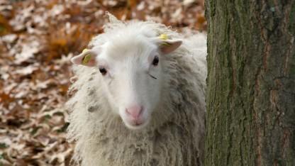 Der mutmaßliche Betreiber des Sheep Marketplace ist wegen des Verdachts der Geldwäscherei verhaftet worden.