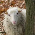 Illegale Onlinemärkte: Mutmaßlicher Betreiber des Sheep Marketplace verhaftet