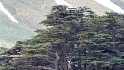 Ein bislang unbekannter Cyberspionagering wurde nach der Zeder benannt, dem Nationalbaum des Libanon.