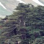 Operation Volatile Cedar: Spionagesoftware aus dem Libanon
