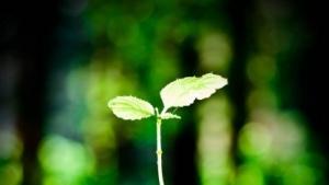 """Die große Koalition will die """"zarte Pflanze"""" Vorratsdatenspeicherung nicht vorschnell zerreden."""