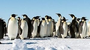 Die Linux-Community besitzt nun einen Code of Conflict.