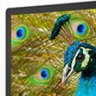 4K und 5K: Apple unterstützt Doppelkabel-Displays mit hoher Auflösung