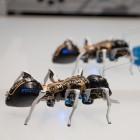 Festo: Ameisenroboter krabbeln koordiniert