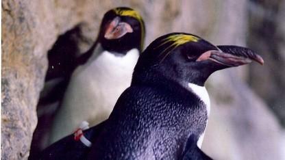 Linux 4.1 ist fertig.