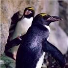Linux 4.1: Ext4 verschlüsselt sich selbst