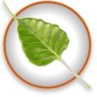 Linux-Desktops: Bodhi erstellt Fork von Enlightenment