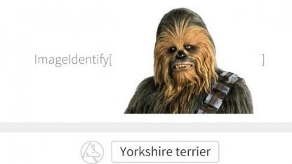 Chewbacca, der Yorkshireterrier