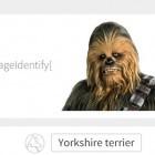 Bilderkennung mit Mathematica: Wenn aus Chewbacca ein Yorkshire Terrier wird