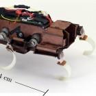 Velociroach: Der Roboter mit den schnellsten Schritten