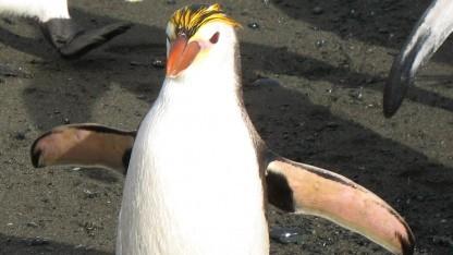 Linux 4.2 ist erschienen.