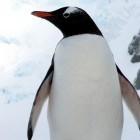 Linux-Kernel: Technik für SSD-Cache soll zum Super-Dateisystem werden